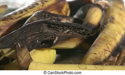 Maggots and Flies on Banana Peel - Maggots, knats, flies,...