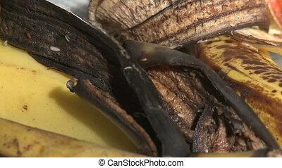 Maggots Devouring Banana Peel - Maggots, knats, flies,...