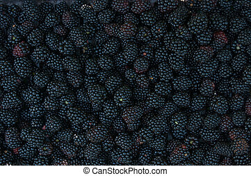 Backgrounds of blackberries - Backgrounds of many of...