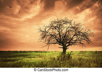 Lonely dead tree. Art nature. Infrared style.