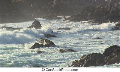 Waves Crashing as Seal Leaps - LS of waves crashing onto...