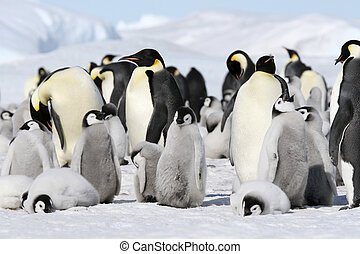 Emperor penguins Aptenodytes forsteri on the ice in the...