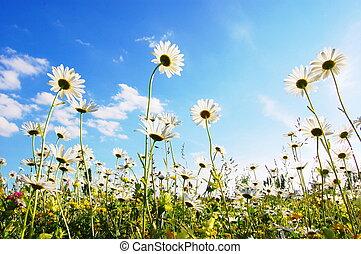 blu, estate, fiore, cielo, sotto