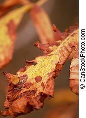 leaves - A leave in autumn light