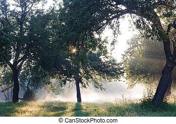 Dawn in the apple garden of Eden
