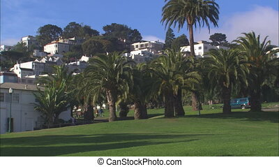 WS Delores Park Palms - WS of Delores Park in the Mission...