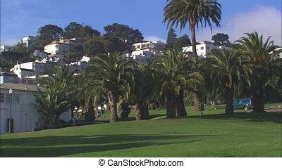 WS Delores Park Palms