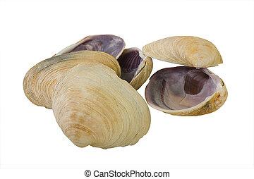 Aquatic Mollusk Shells - Big Mollusk Shells for Gourmet Food...