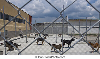 dogs shelter - homeless dogs behind fance outside, in a...