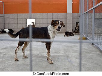 dog in a shelter - homeless dog in a shelter behind bars,...