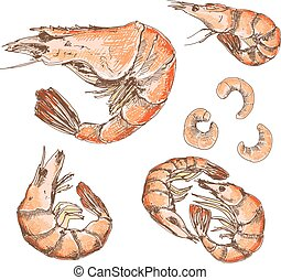 Shrimps. Set of hand drawn graphic illustrations