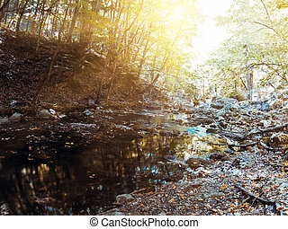 Forest river. Early autumn outdoor