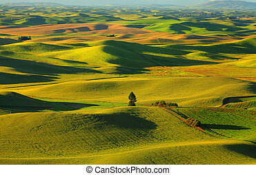 Palouse rolling hills - Beautiful landscape of Palouse...