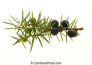 Juniper Berries - A heap of dried Juniper Berries isolated...