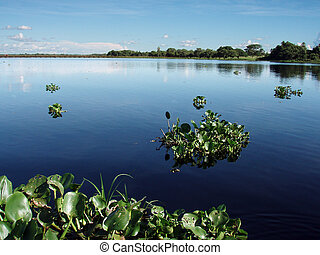 Pantanal Lake - A lake in the Brazilian Wetlands Pantanal...