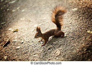 squirrel with bushy tail