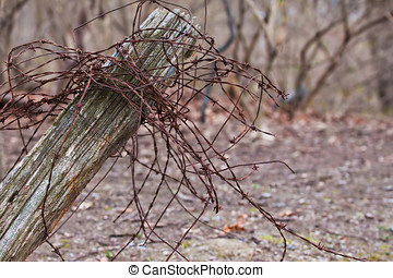 Rusty Barbed wire on rustic fence post - Rustic fence post...