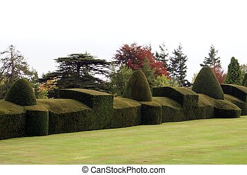 hedge sculptured hedge - trees