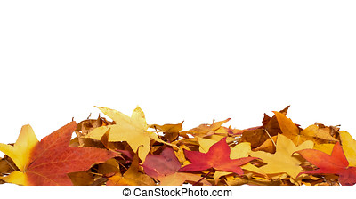 Border of Colorful fall leaves