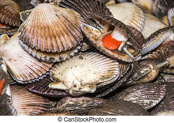 Seafood - Scallops - Two Types Of Meat In One Shell
