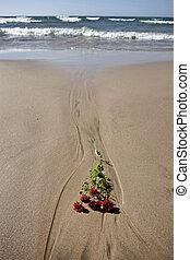 Shoreline Lake Huron Ontario Canada beach waves