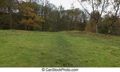 Walking forest meadow in autumn