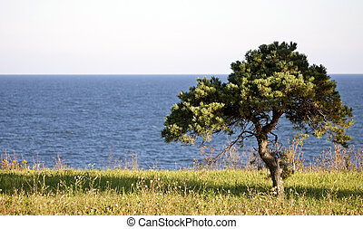 Lone Tree and Lake Erie Ontario Canada