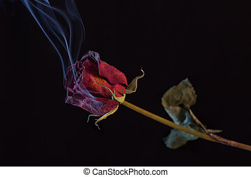 Smoking Red Rose. A symbol of a burning love, or one that...