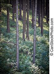 bosque,