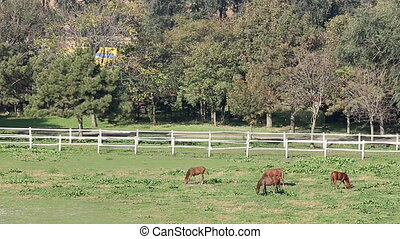 horses on farm rural landscape