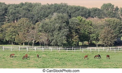 horses on pasture rural landscape