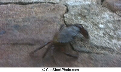 Crab race - Crab walking sideways on a ramp