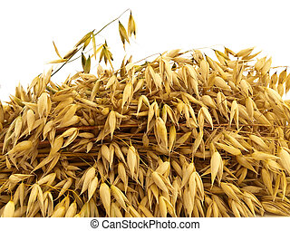 oats - A lot of oats on a white background