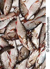 Fish in scales background - Cheese fish in scales is put by...
