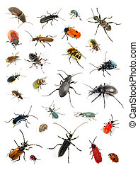 Beetles - Collection of many different beetles on white...