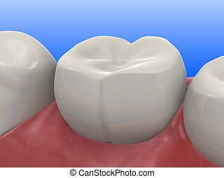 human tooth - 3d rendered illustration of a healthy tooth