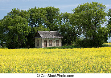 Little House on the Prairies