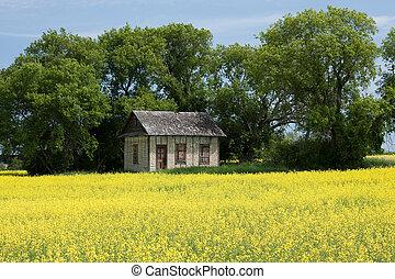 Little House on the Prairies - An old prairie house...
