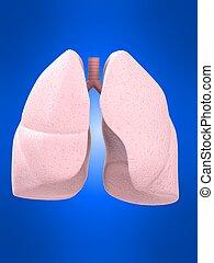 human, pulmão