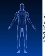 male body - 3d rendered illustration of a male body