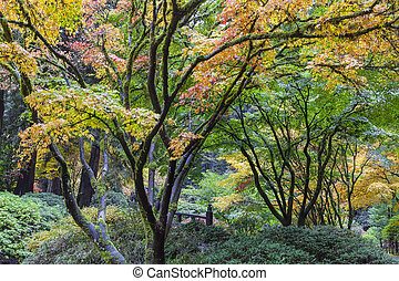 Fall Colors at Japanese Garden