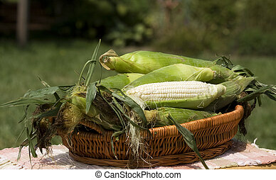 Basket Corn on the Cob - Basket on outdoor table filled with...
