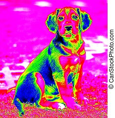 Infra red dog - Picture of the sitting small young dog made...