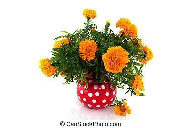 tagetes - Orange tagetes in red speckles vase over white
