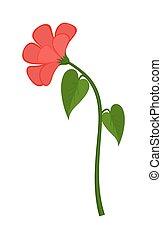 赤, 花, 植物,