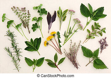 Herbal Nature Study - Herb leaf and flower selection for...