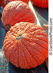 indian pumpkin
