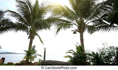 Palm trees at the shore on a background of sunlight. Koh...