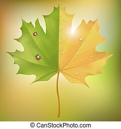 Maple leaf summer autumn - Summer and fall on a single leaf...