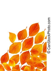 Close-up of yellow leaves, isolated on white background.